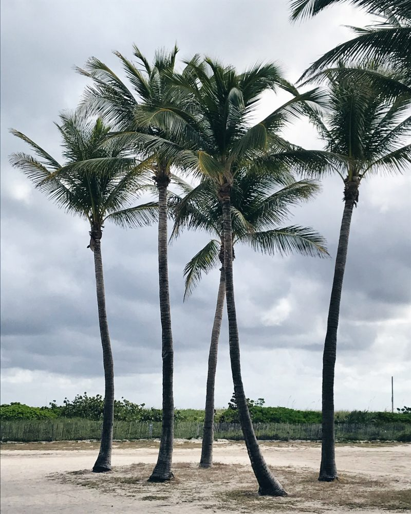 miami beach, life with aco, palm trees