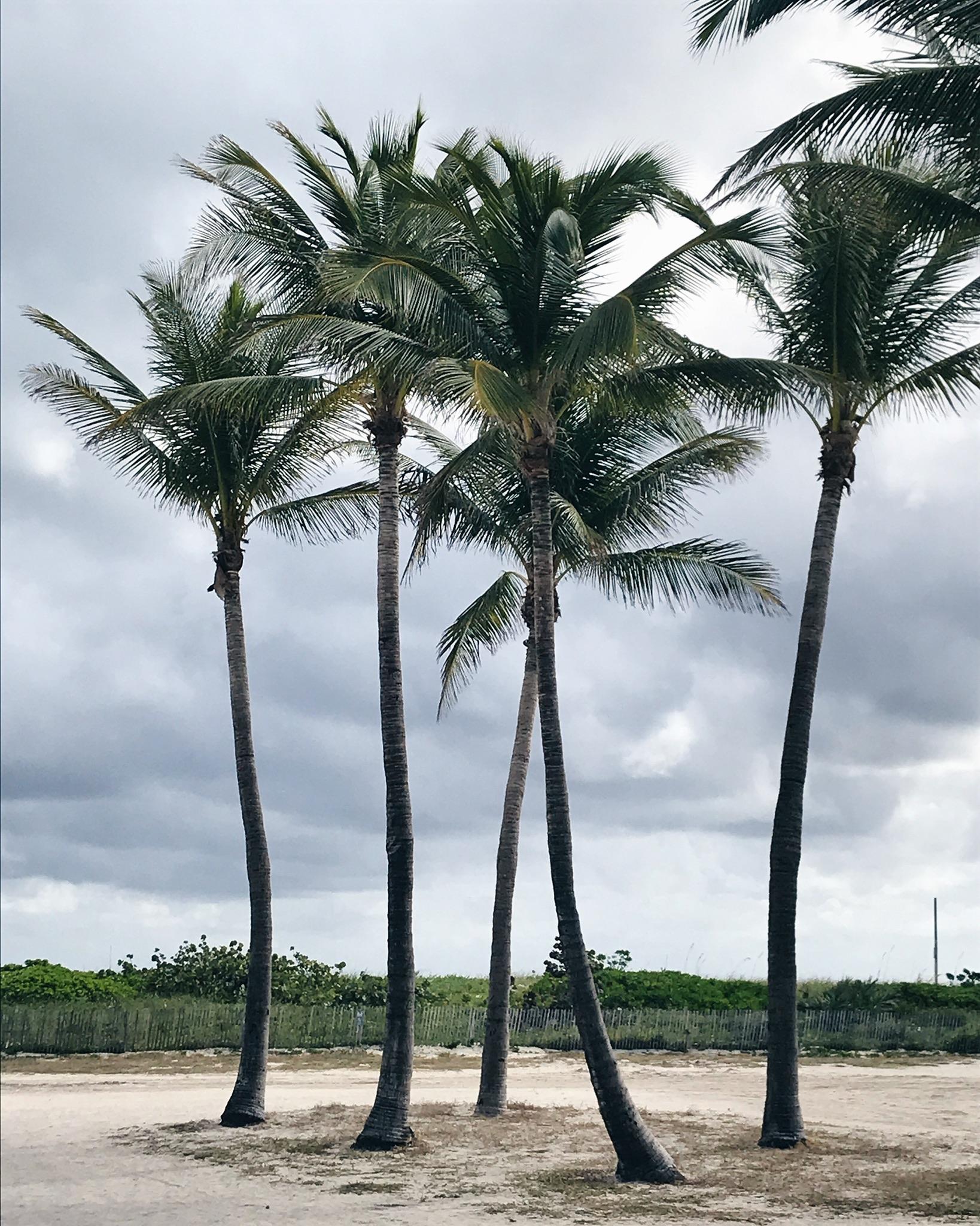 miami beach, life with aco, palm trees
