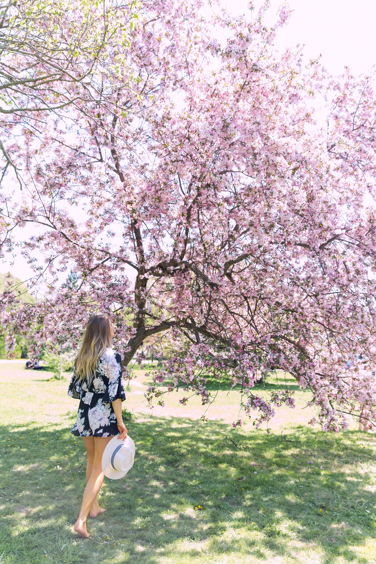 1 person, cherry blossom trees ottawa