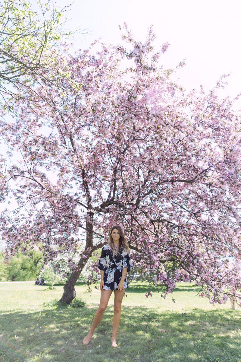 1 person, cherry blosasom trees ottawa